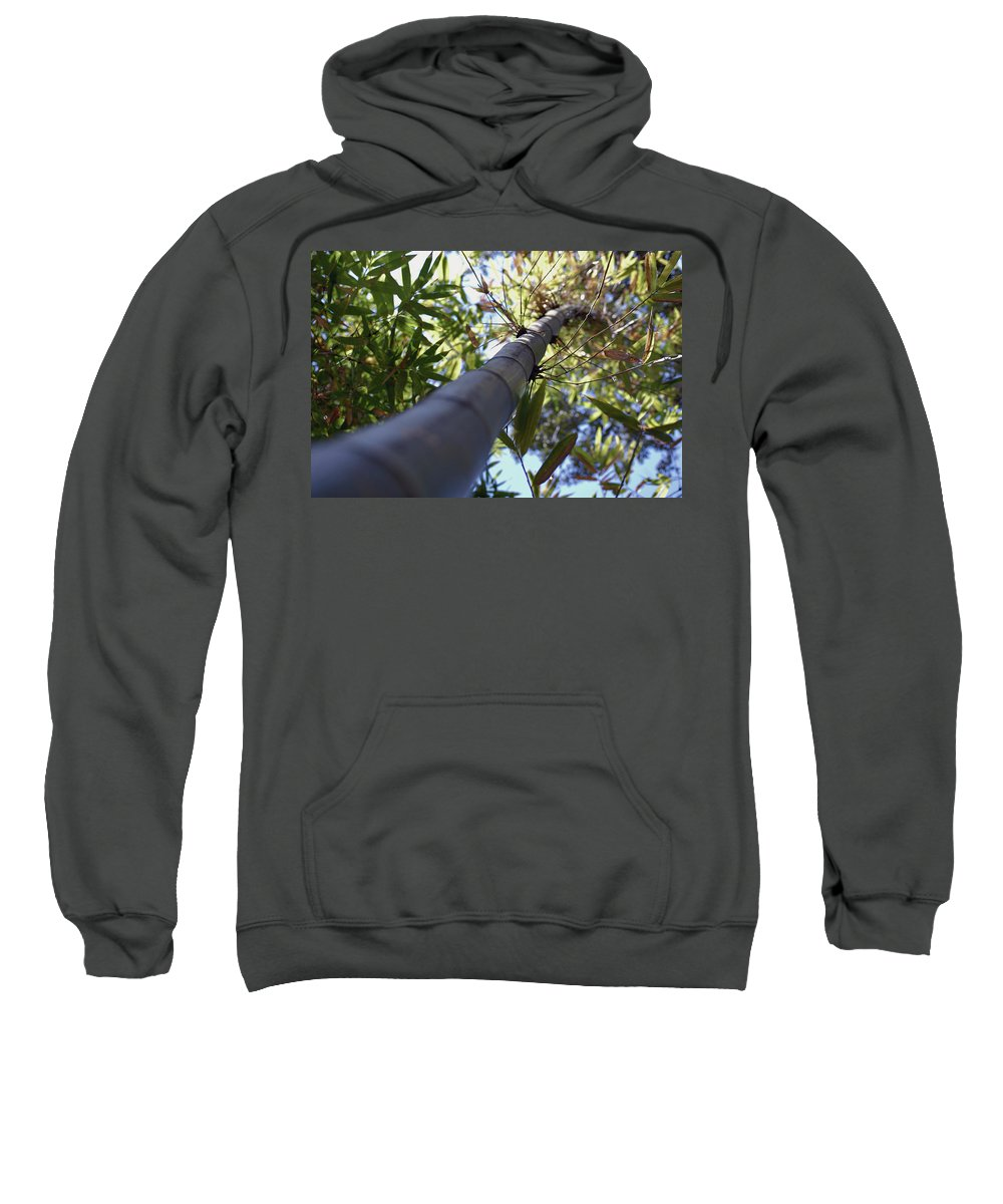 Bamboo Sweatshirt featuring the photograph Bamboo by Robert Meanor