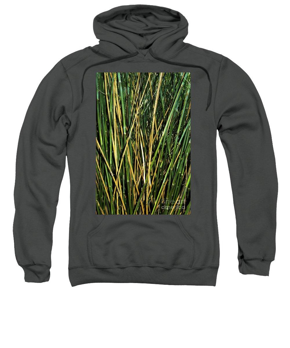 Charleston South Carolina Magnolia Plantation And Gardens Bamboo Shoots Plant Plants Sweatshirt featuring the photograph Bamboo Shoots by Bob Phillips