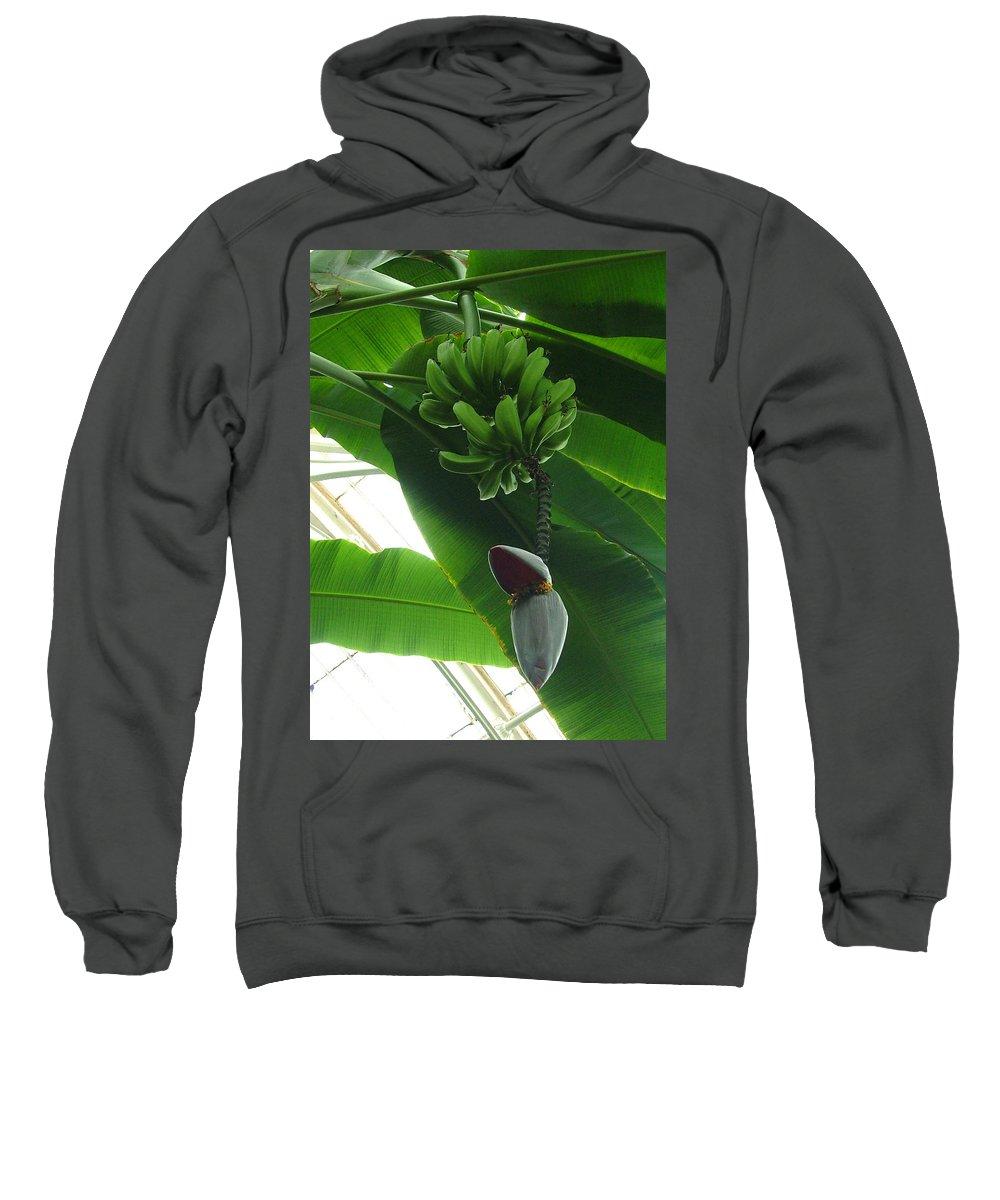 Kew Sweatshirt featuring the photograph Banana Plant Kew London England by Heather Lennox