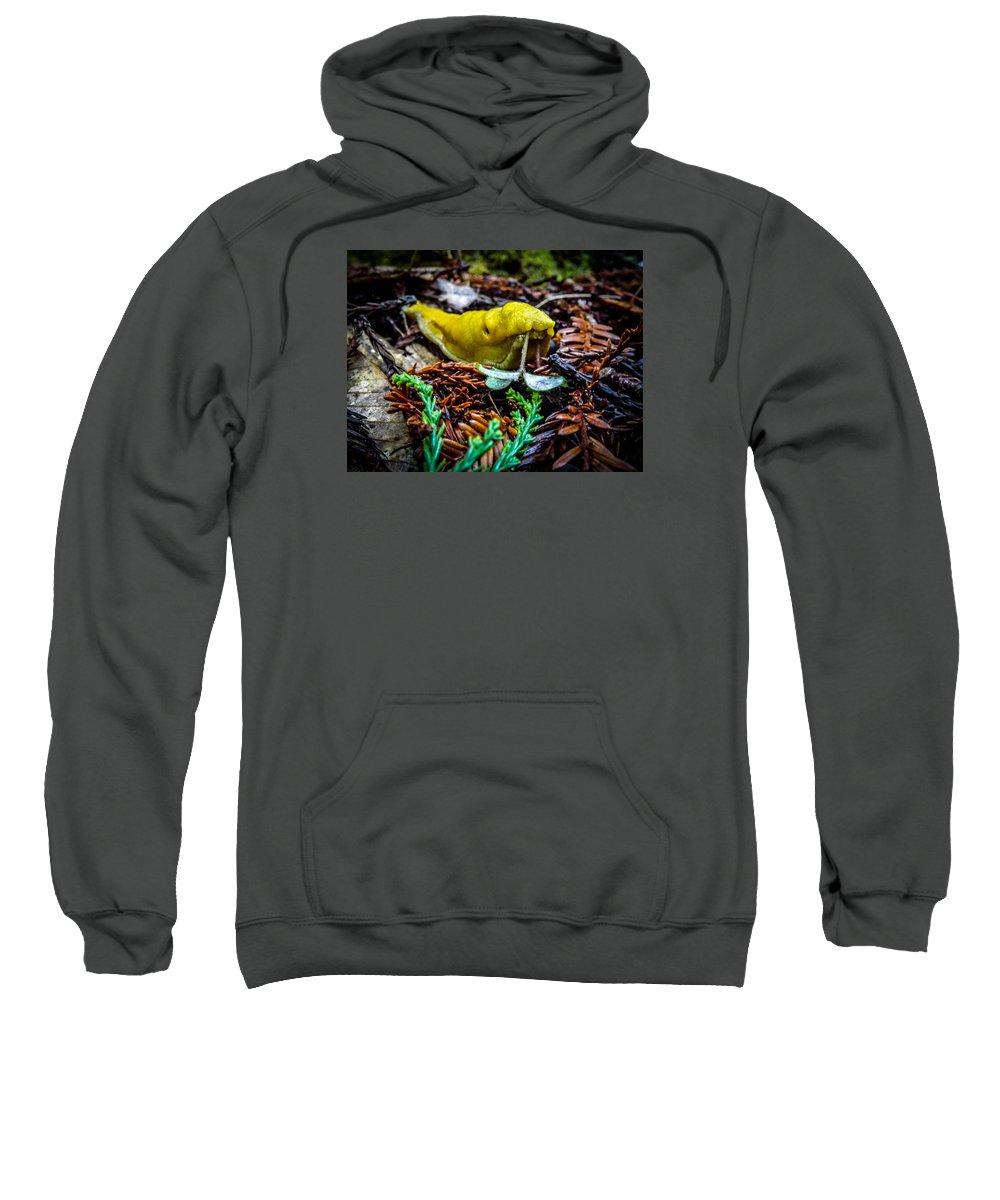 Sweatshirt featuring the photograph Banana Slug by Reed Tim
