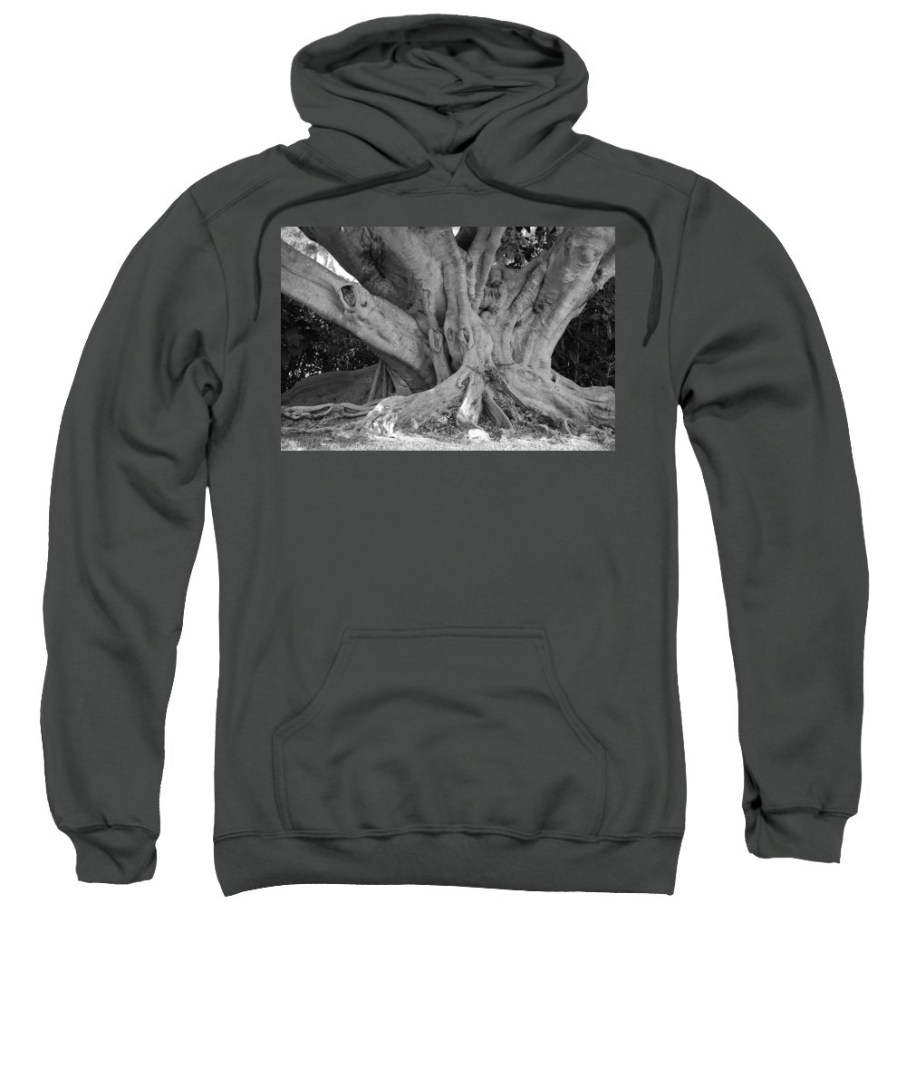 Tree Sweatshirt featuring the photograph Banyan Tree by Rob Hans