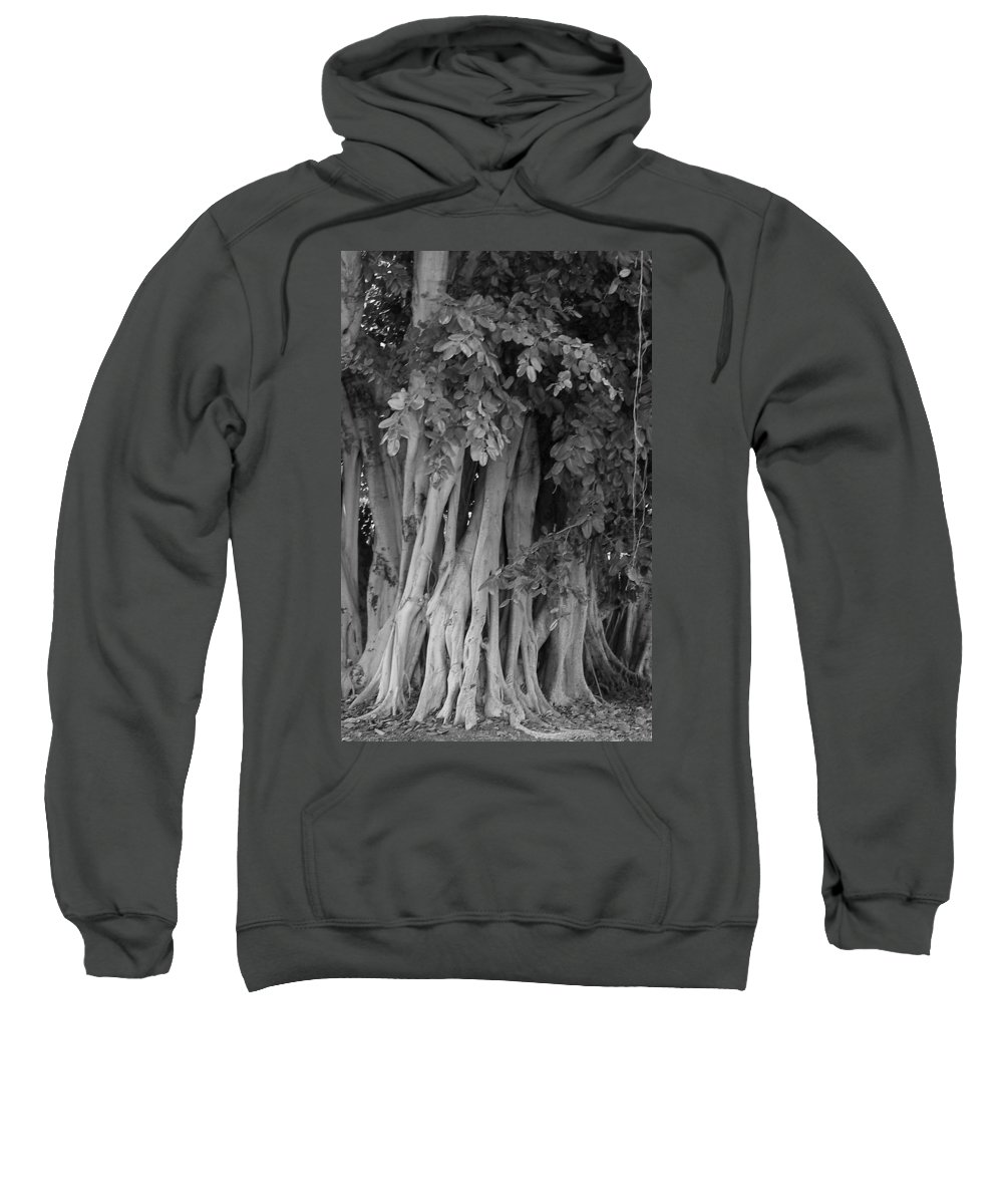 Sweatshirt featuring the photograph Banyans by Maria Bonnier-Perez