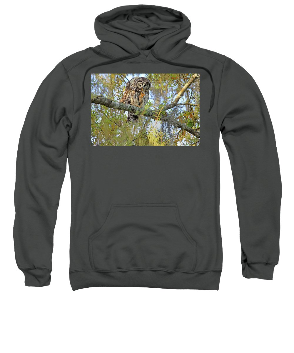 Owl Sweatshirt featuring the photograph Barred Owl by Deborah Benoit