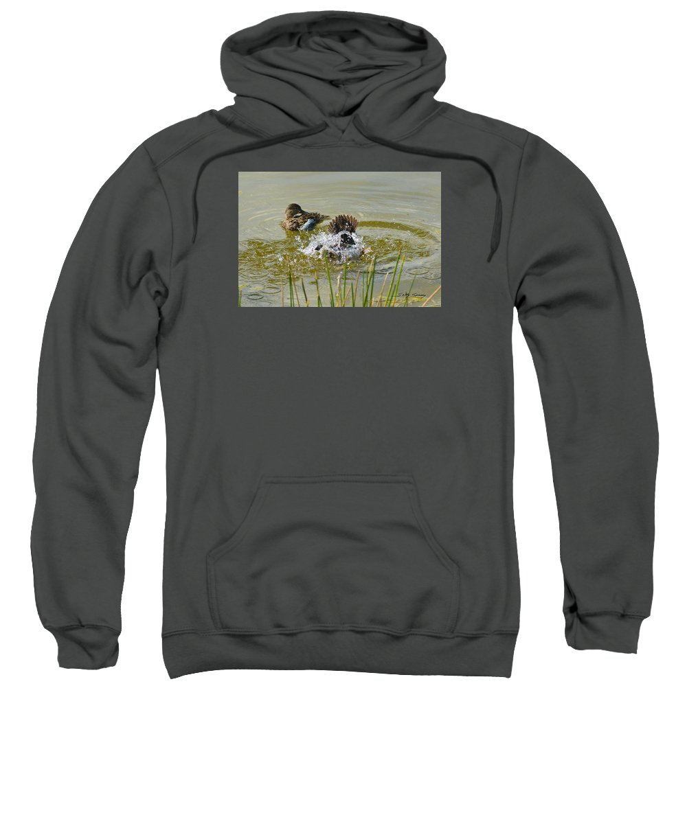 Blue Winged Teal Sweatshirt featuring the pyrography Bathing by Sally Sperry