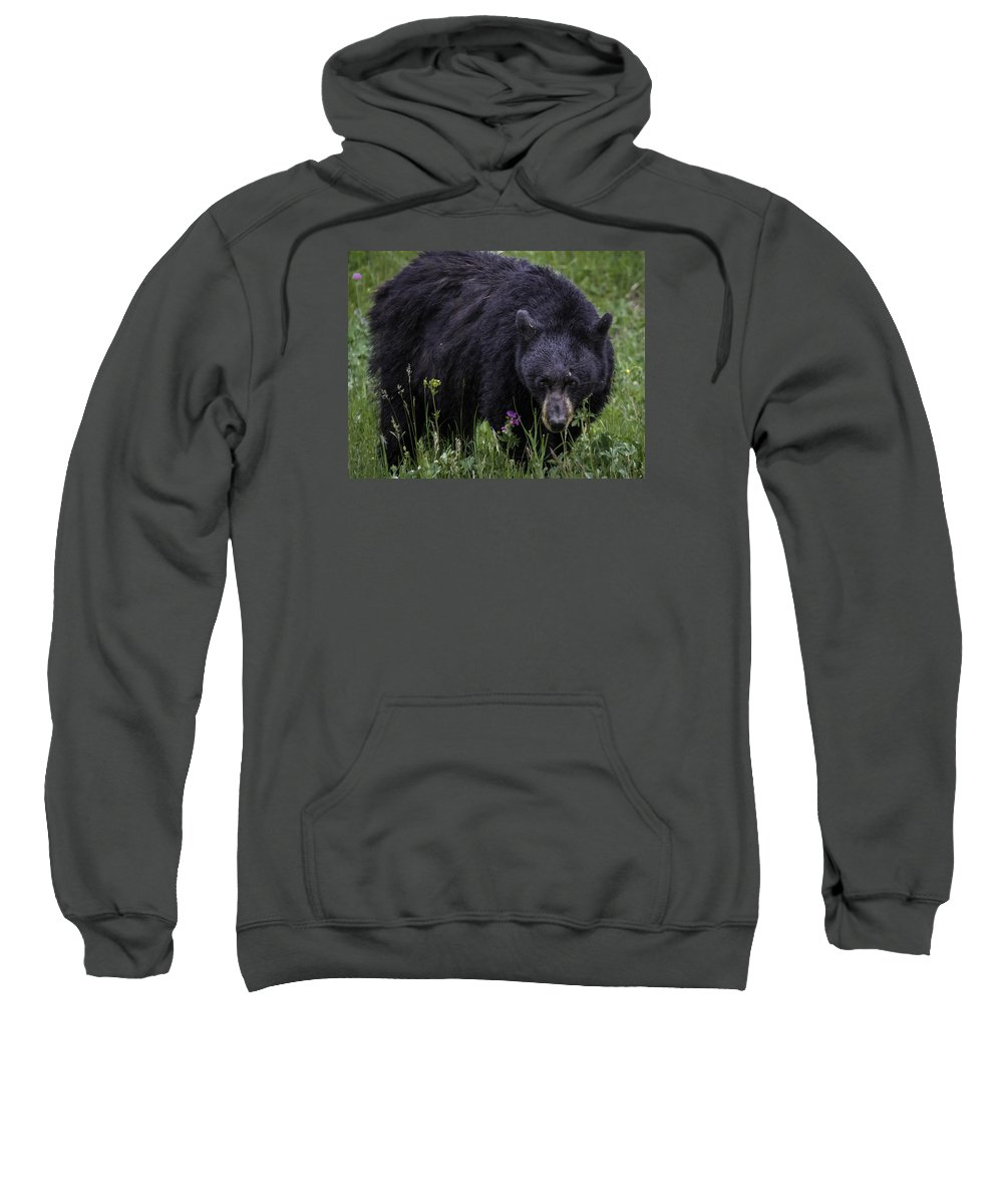 Black Bear Sweatshirt featuring the photograph Bear Gaze by Elizabeth Eldridge