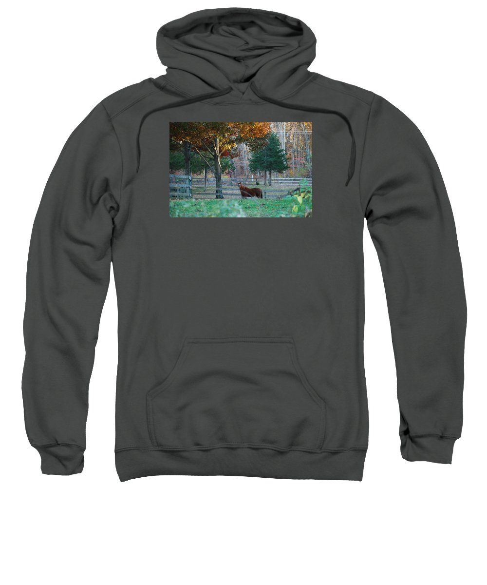 Horse Sweatshirt featuring the photograph Beautiful Brown Horse by Susan Strickland