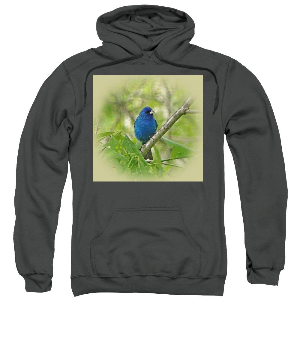 Indigo Bunting Sweatshirt featuring the photograph Beautiful Indigo Bunting by Sandy Keeton