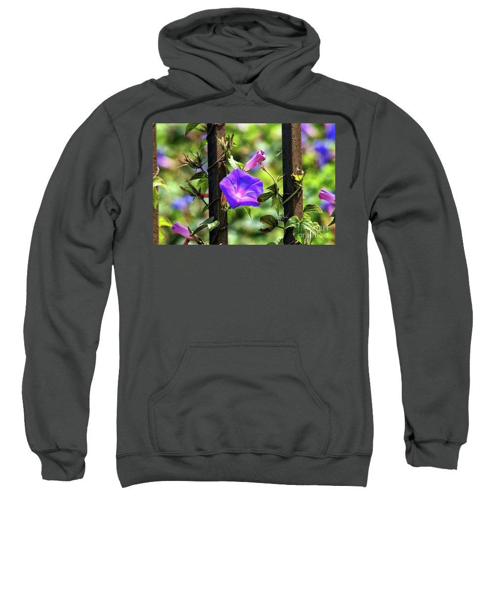 Railroad Vine Flower Sweatshirt featuring the photograph Beautiful Railroad Vine Flower II by Mariola Bitner