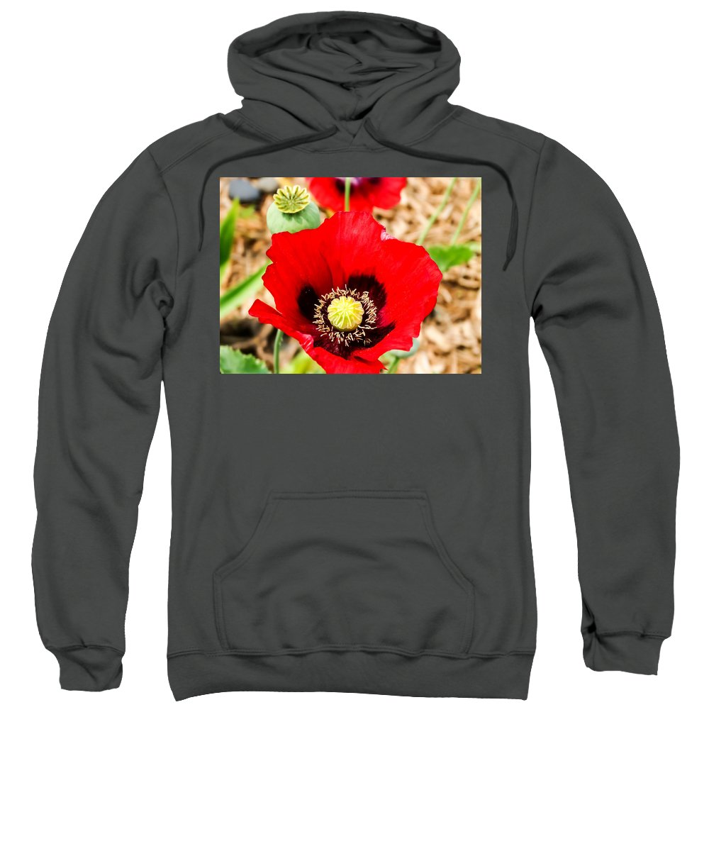 Beautiful Red Poppy Sweatshirt featuring the photograph Beautiful Red Poppy by Cynthia Woods