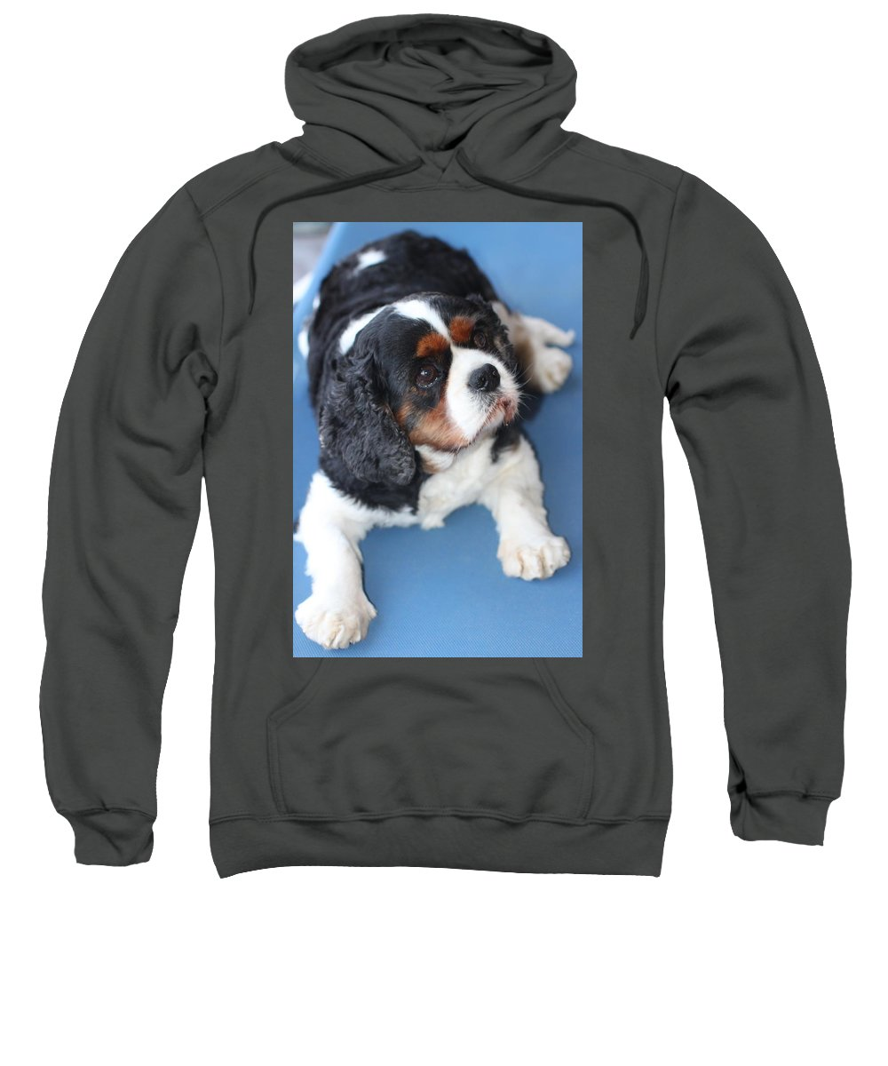 Animals Sweatshirt featuring the photograph Beautiful Spaniel by Lynsey Au lait