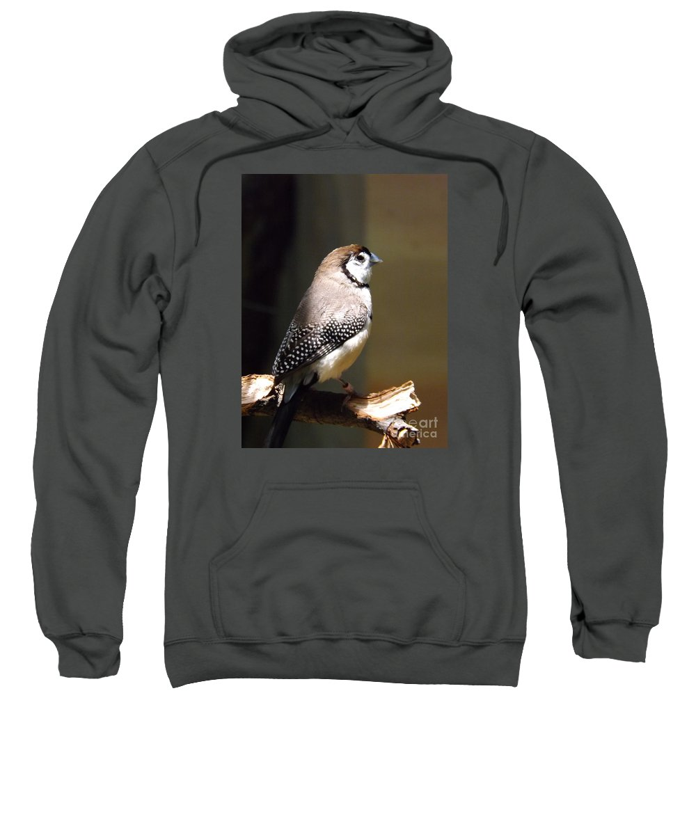 Owl Sweatshirt featuring the photograph Beauty In Light by Sara Raber