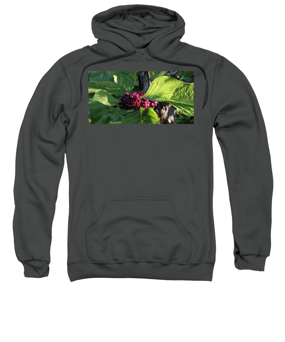 Nature Sweatshirt featuring the photograph Beautyberry 2 by Peg Urban