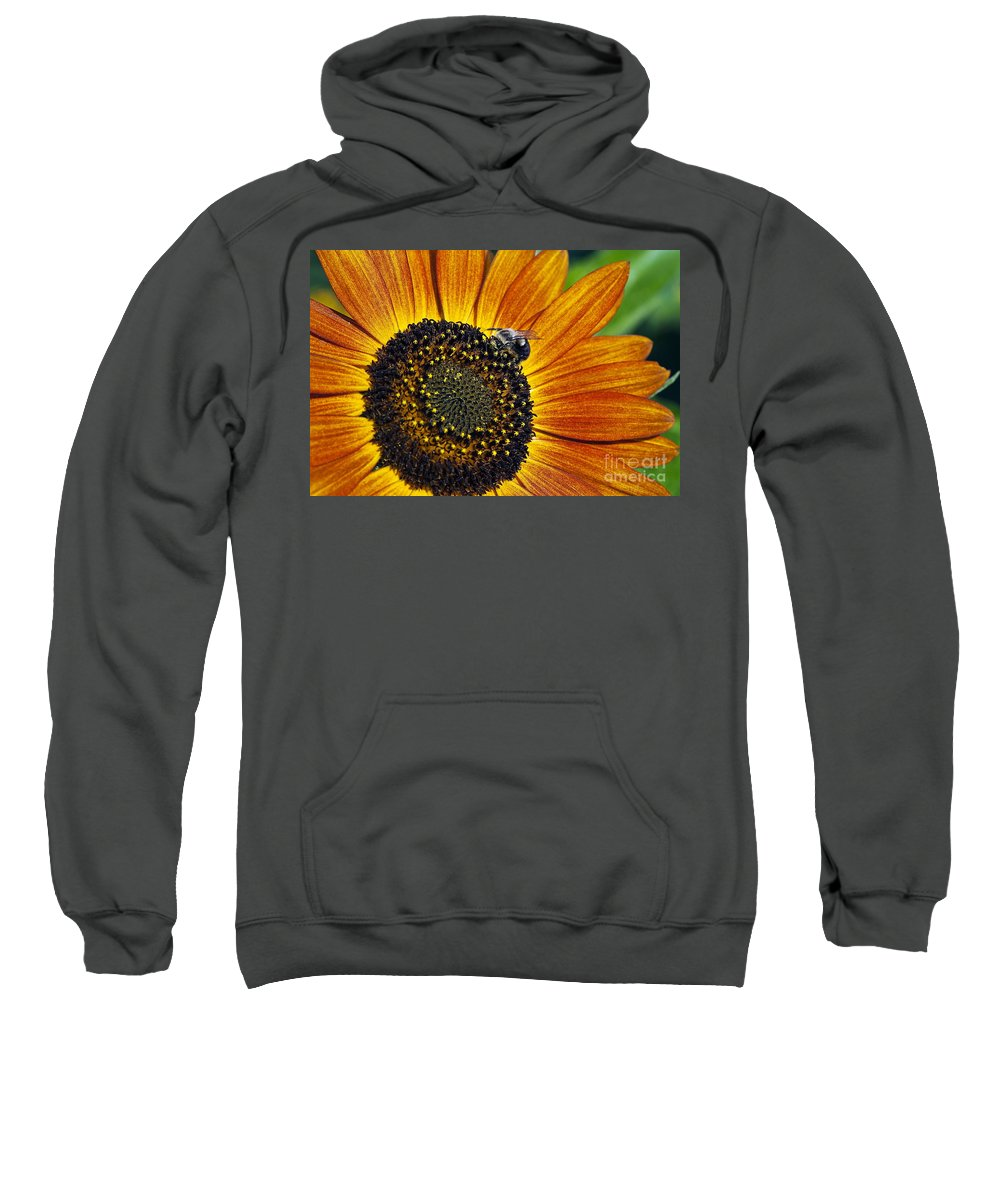 Helianthus Annuus Sweatshirt featuring the photograph Bee And Sunflower. by John Greim