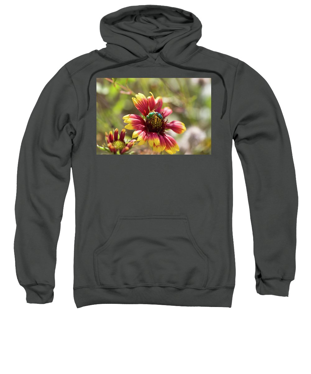 Agapostemon Sweatshirt featuring the photograph Bee On Gaillardia by Diane Macdonald