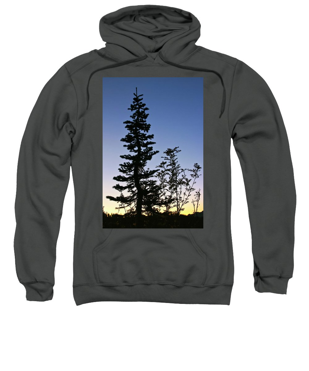 Tree Sweatshirt featuring the photograph Bent Conifer by Albert Seger