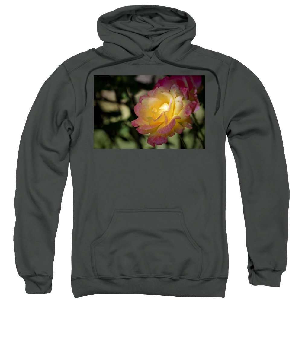 Rose Sweatshirt featuring the photograph Bettys Rose by Teresa Mucha