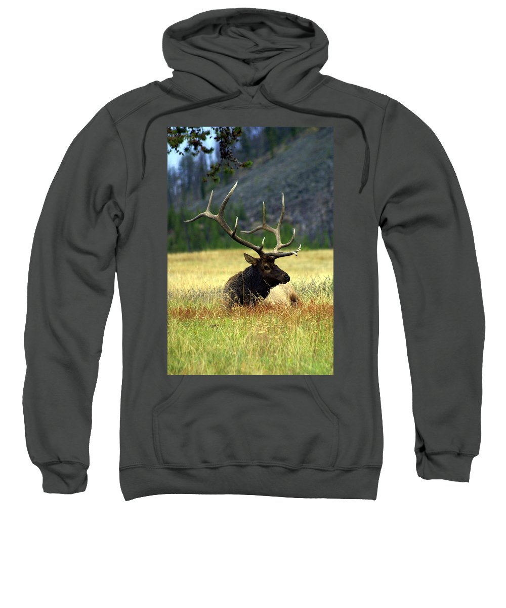Sweatshirt featuring the photograph Big Bull 2 by Marty Koch