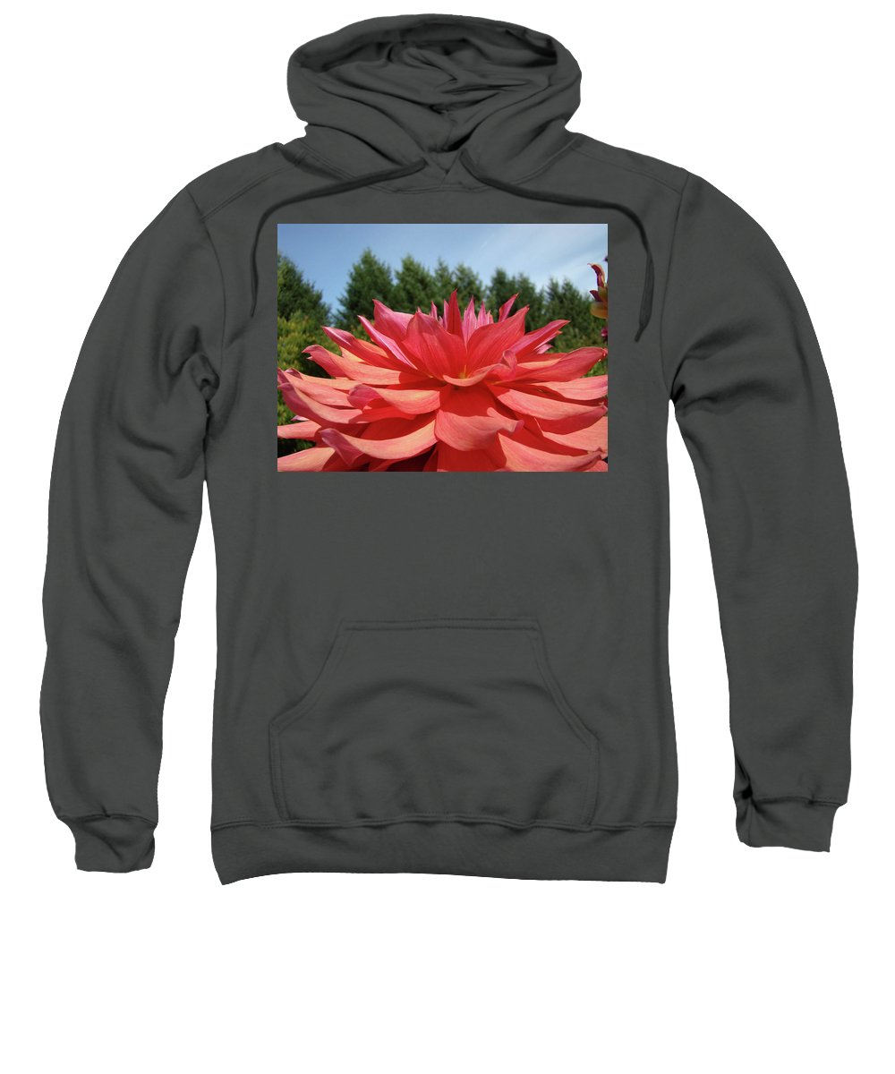 Dahlia Sweatshirt featuring the photograph Big Dahlia Flower Blooming Summer Floral Art Prints Baslee Troutman by Baslee Troutman