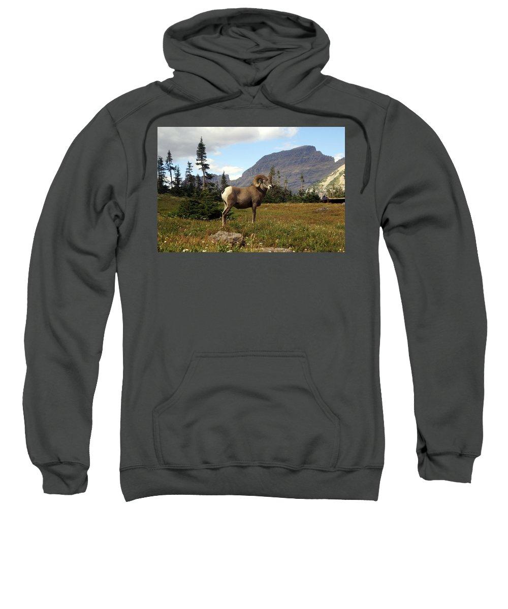 Big Horn Ram Sweatshirt featuring the photograph Big Horn 4  by Marty Koch