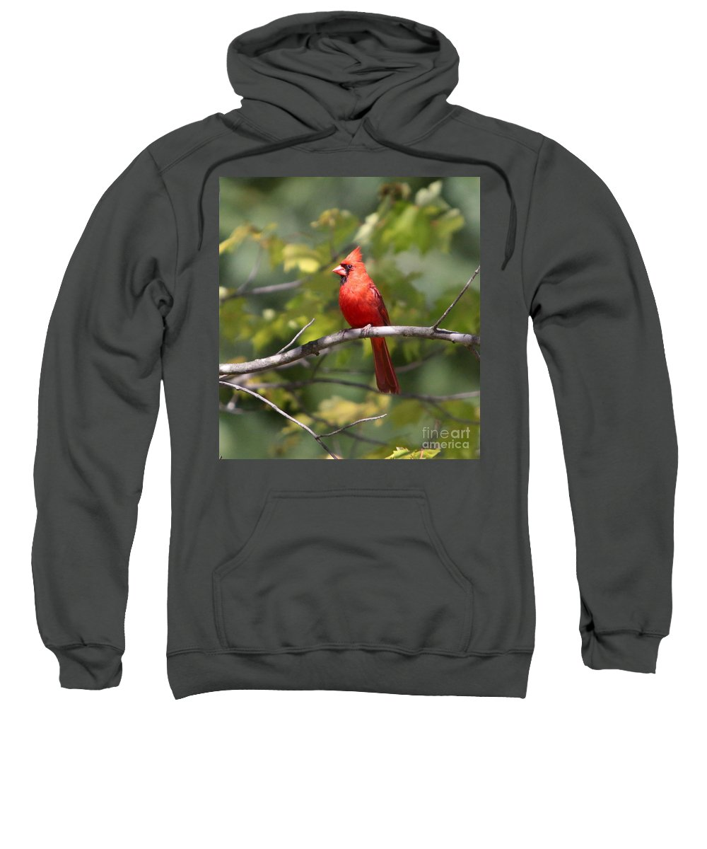 Cardinal Sweatshirt featuring the photograph Big Red by Robert Pearson