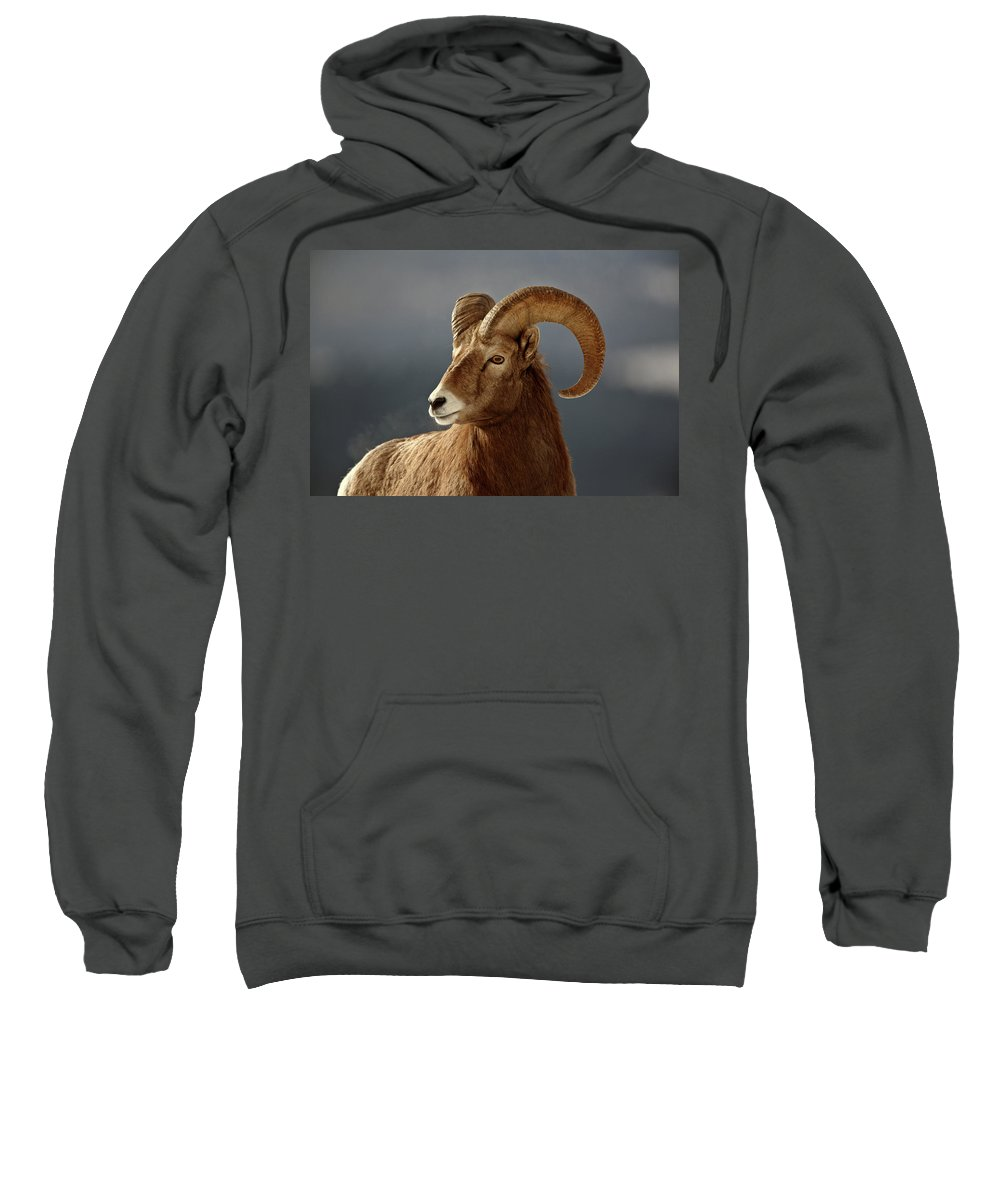 Rocky Mountain Sweatshirt featuring the digital art Bighorn Sheep In Winter by Mark Duffy