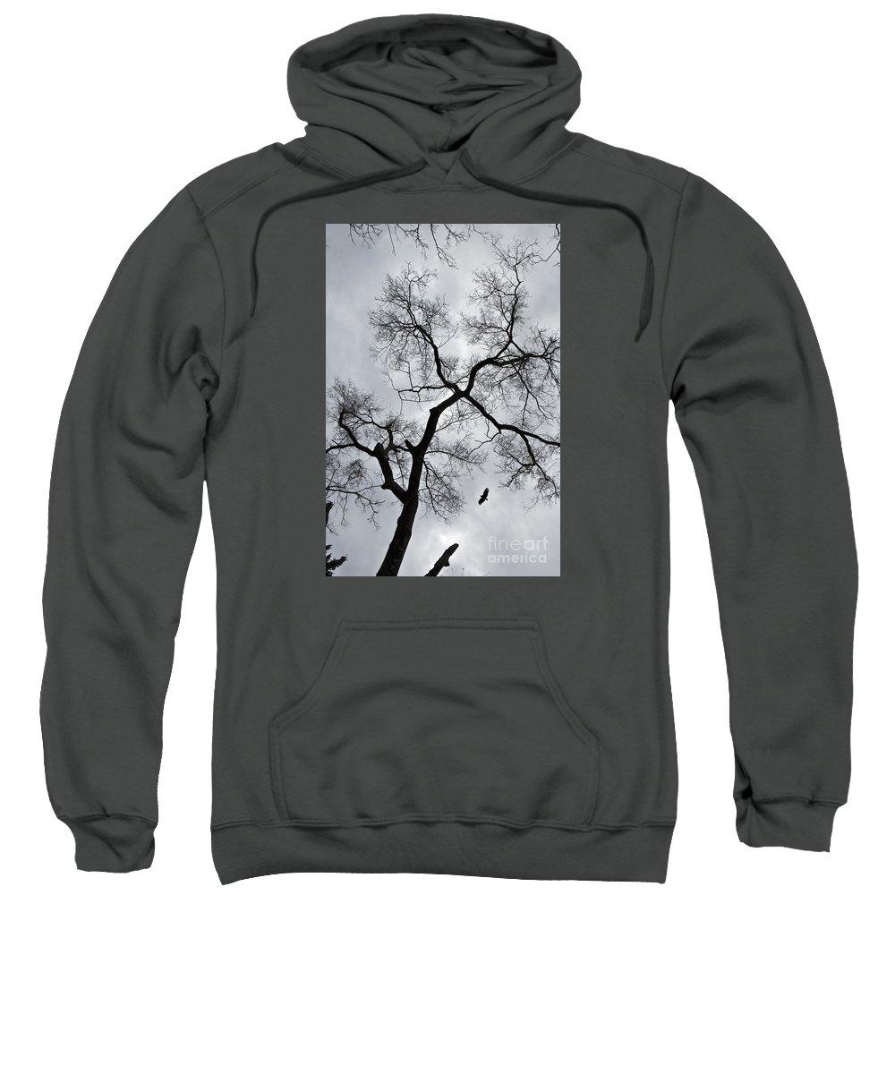 Bird Sweatshirt featuring the photograph Bird And Tree by Bernd Billmayer