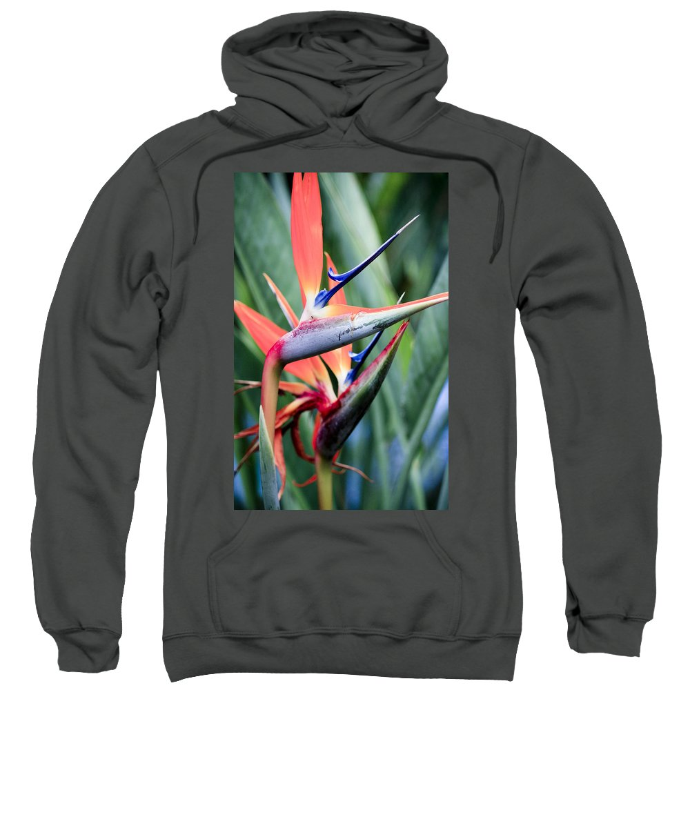 Florals Sweatshirt featuring the photograph Bird Of Paradise by Linda Dunn