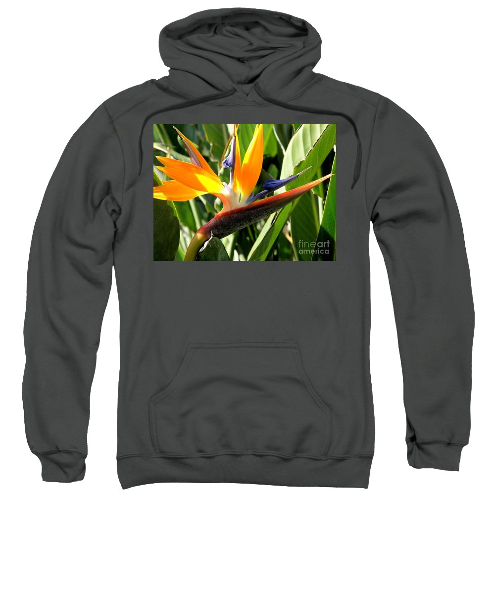 Bird Of Paradise Sweatshirt featuring the photograph Bird Of Paradise by Mary Deal