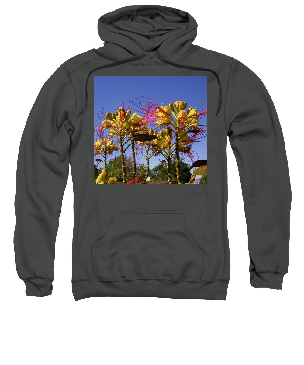 Flowers Sweatshirt featuring the photograph Bird Of Paradise Shrub by Stephanie Moore