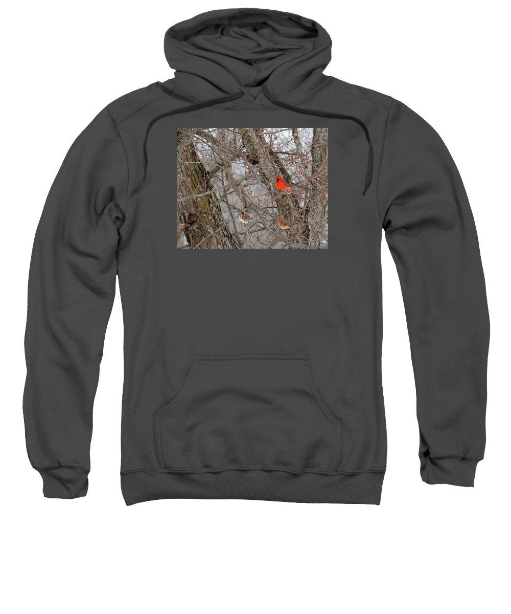 Wildlife Sweatshirt featuring the photograph Birds Of A Feather by Pamela Peters