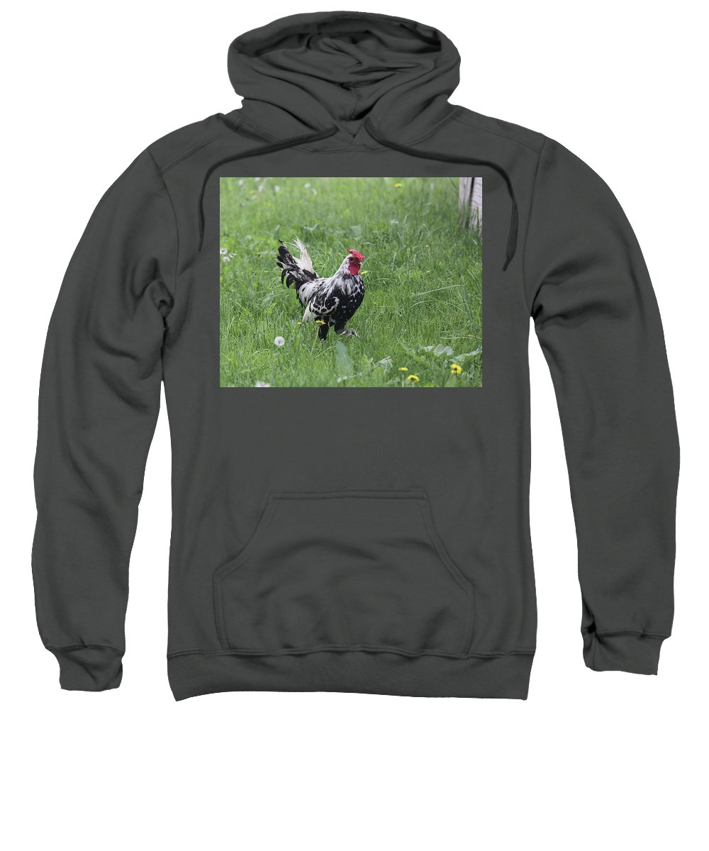 Chicken Sweatshirt featuring the photograph Black And White by Jean Macaluso
