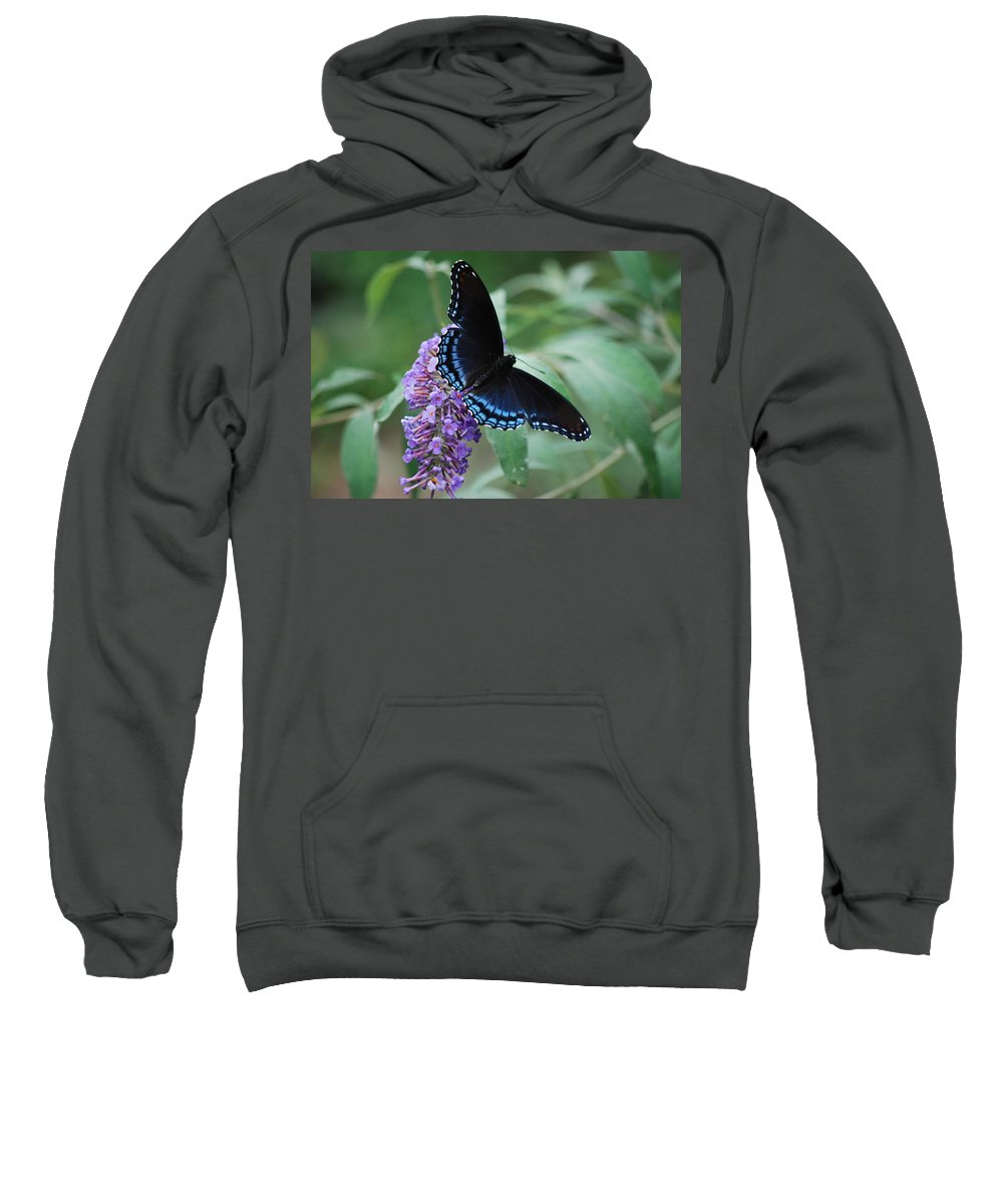 Butterfly Sweatshirt featuring the photograph Black Beauty by Lori Tambakis
