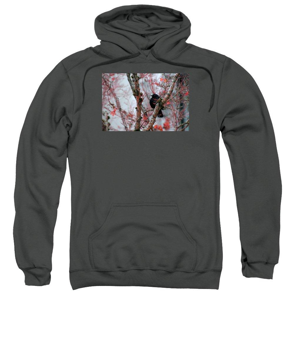 Bird Sweatshirt featuring the photograph Black Bird by Gunay Turgut