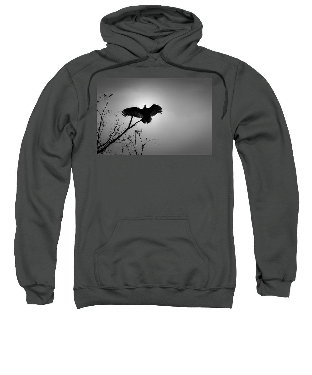 Black Sweatshirt featuring the photograph Black Buzzard 5 by Teresa Mucha
