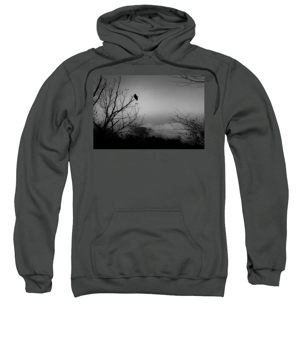 Black Sweatshirt featuring the photograph Black Buzzard 9 by Teresa Mucha