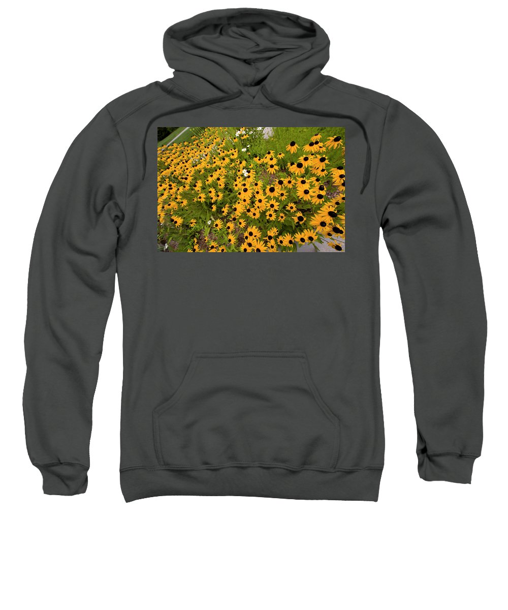 Black Eyed Susans Sweatshirt featuring the photograph Black Eyed Susans-1 by Diane Macdonald