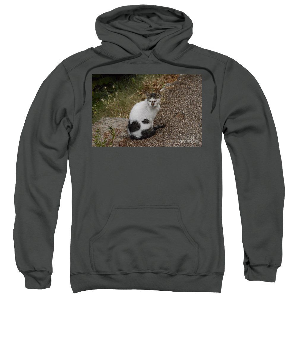 Cat Sweatshirt featuring the photograph Black Heart Cat by Elaine Berger