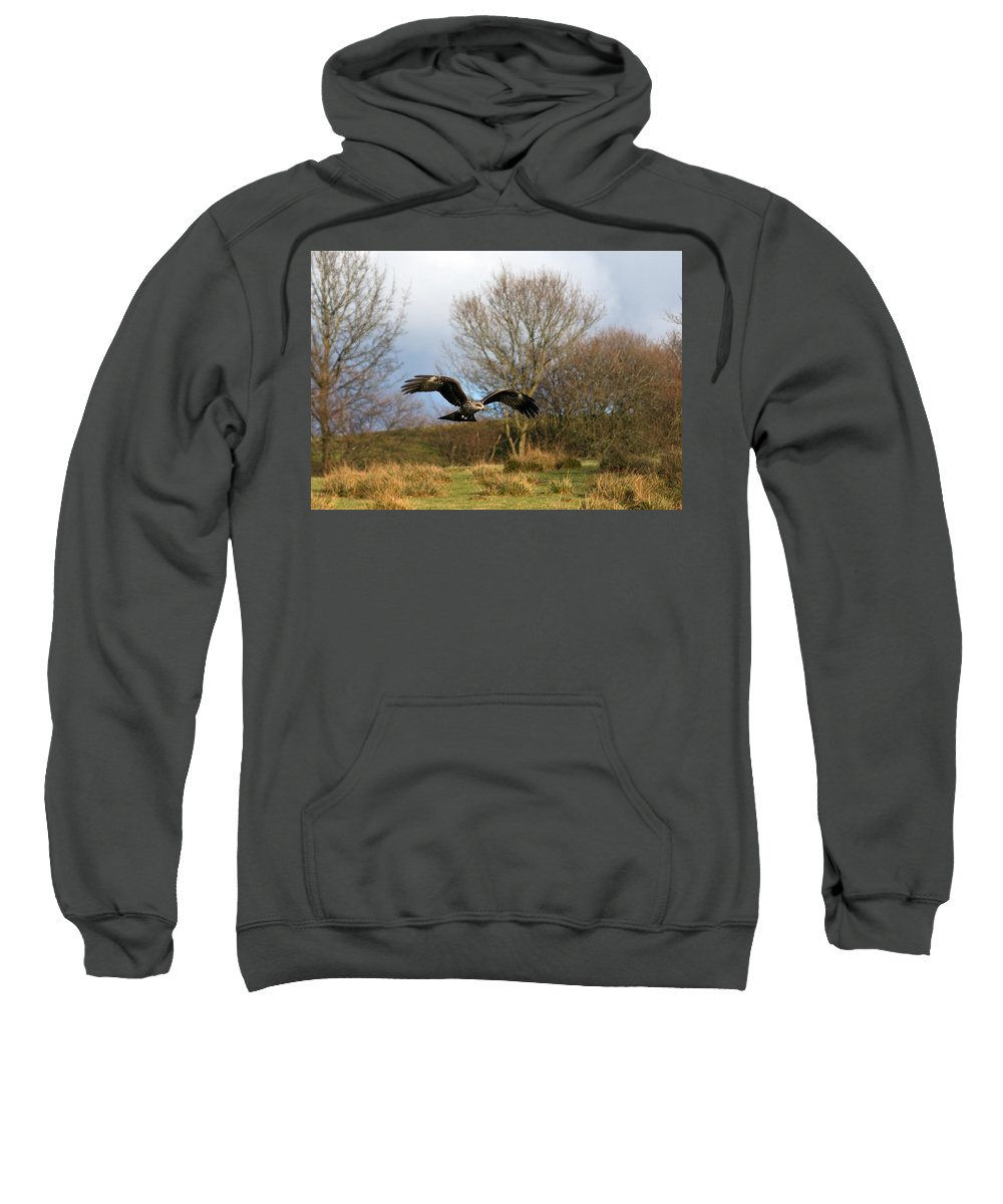 Black Kite Sweatshirt featuring the photograph Black Kite by Bob Kemp