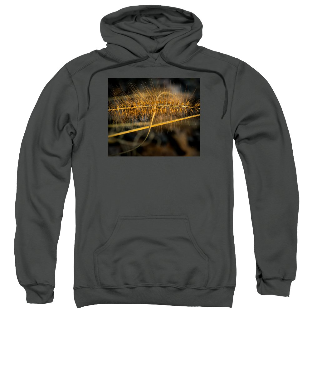 Commelinids Sweatshirt featuring the photograph Black Pennisetum In Setting Sun by Douglas Barnett