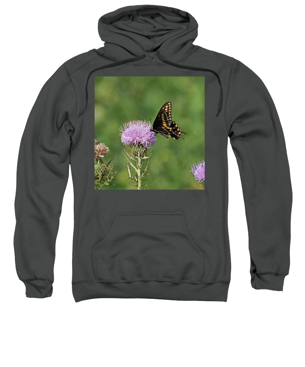 Butterfly Sweatshirt featuring the photograph Spicebush Swallowtail Butterfly by Sandy Keeton