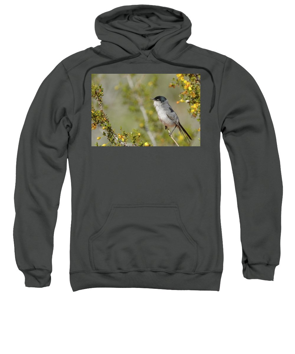 Black-tailed Gnatcatcher Sweatshirt featuring the photograph Black-tailed Gnatcatcher by Richard Eastman