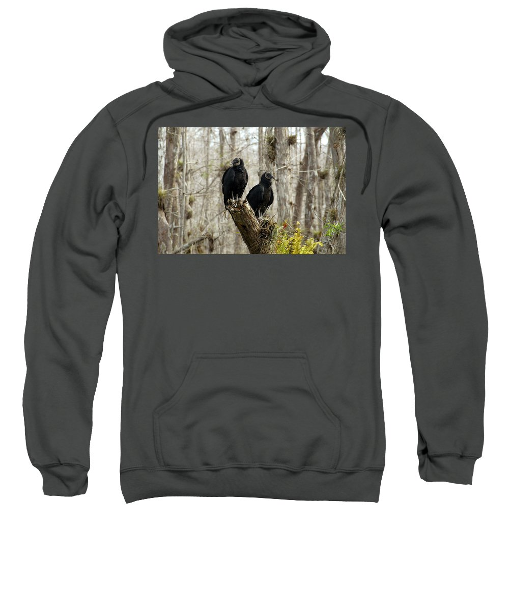Black Vultures Sweatshirt featuring the photograph Black Vultures by David Lee Thompson
