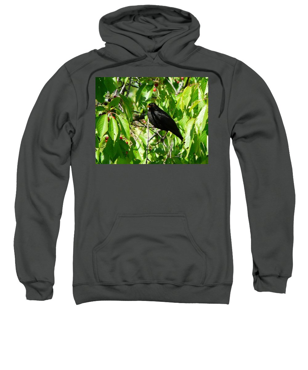 Bird Sweatshirt featuring the photograph Blackbird In The Cherry Tree by Valerie Ornstein