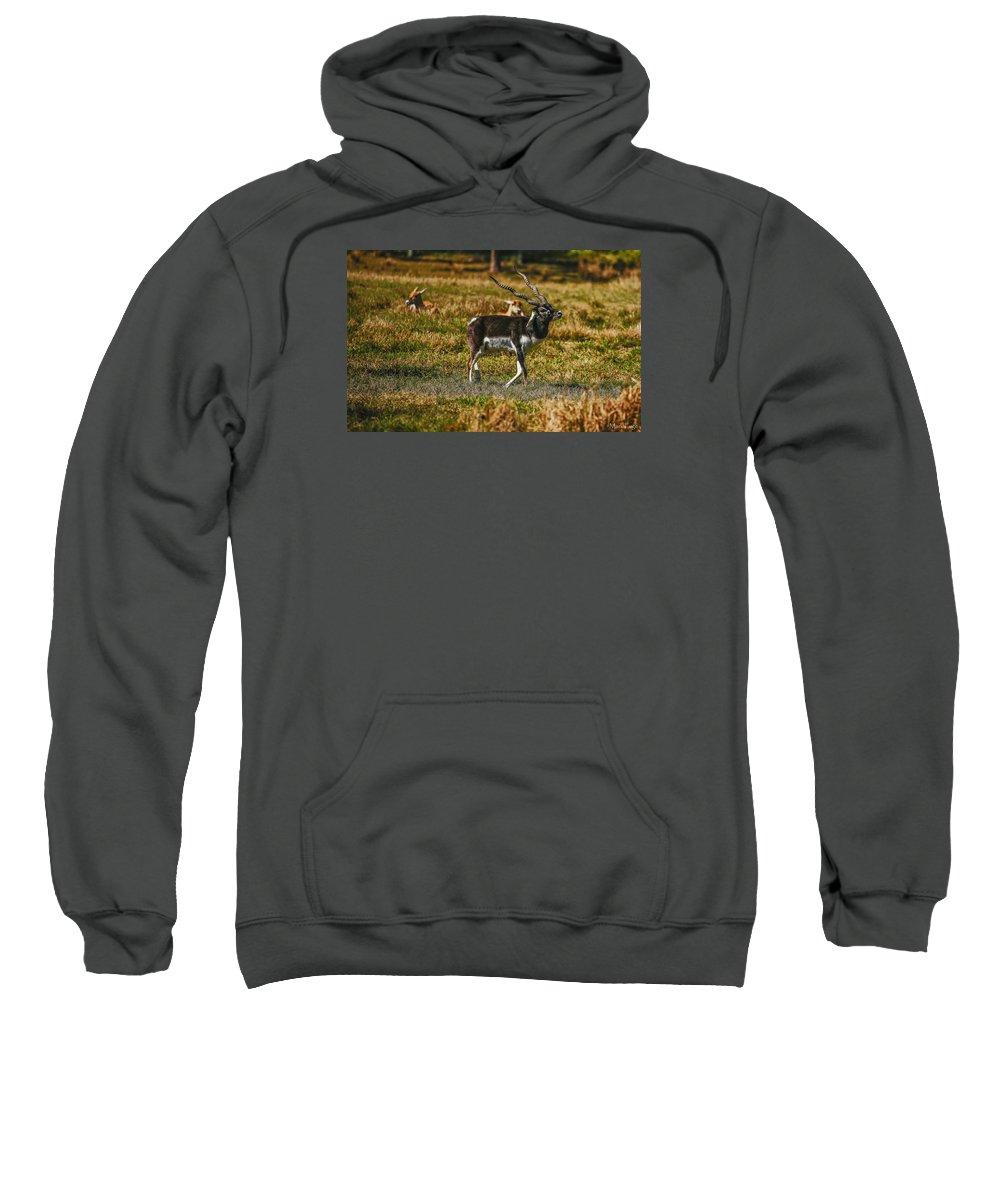Florida Sweatshirt featuring the photograph Blackbuck by Mark Fuge