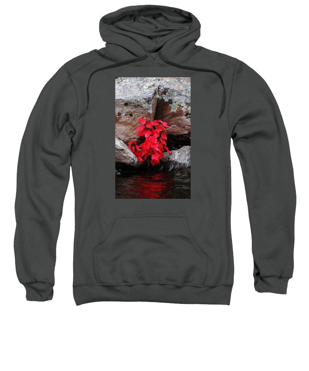 Maple Tree Sweatshirt featuring the photograph Blazing Maple by Debbie Oppermann