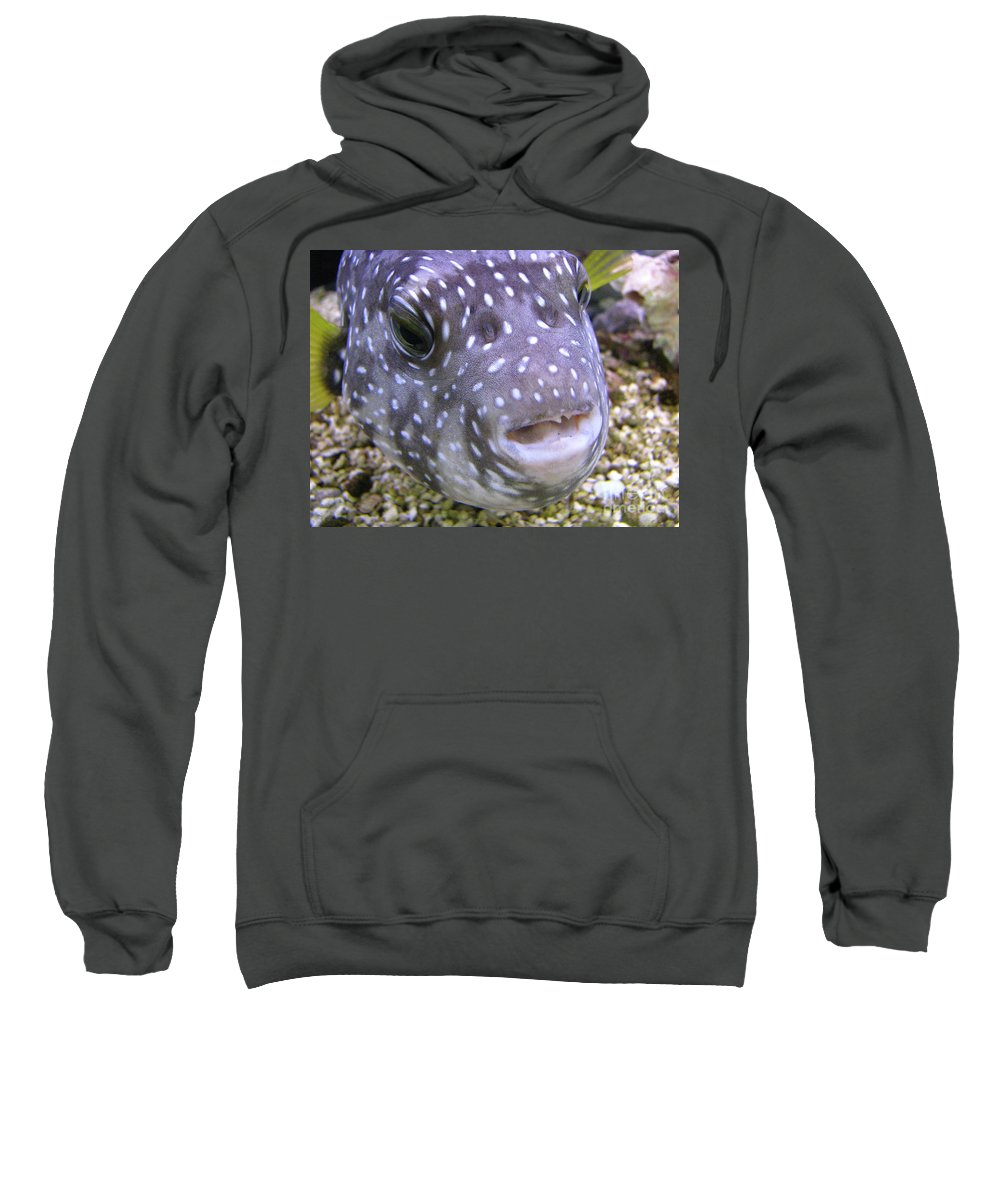 Fish Sweatshirt featuring the photograph Blow Fish Close-up by Donna Brown