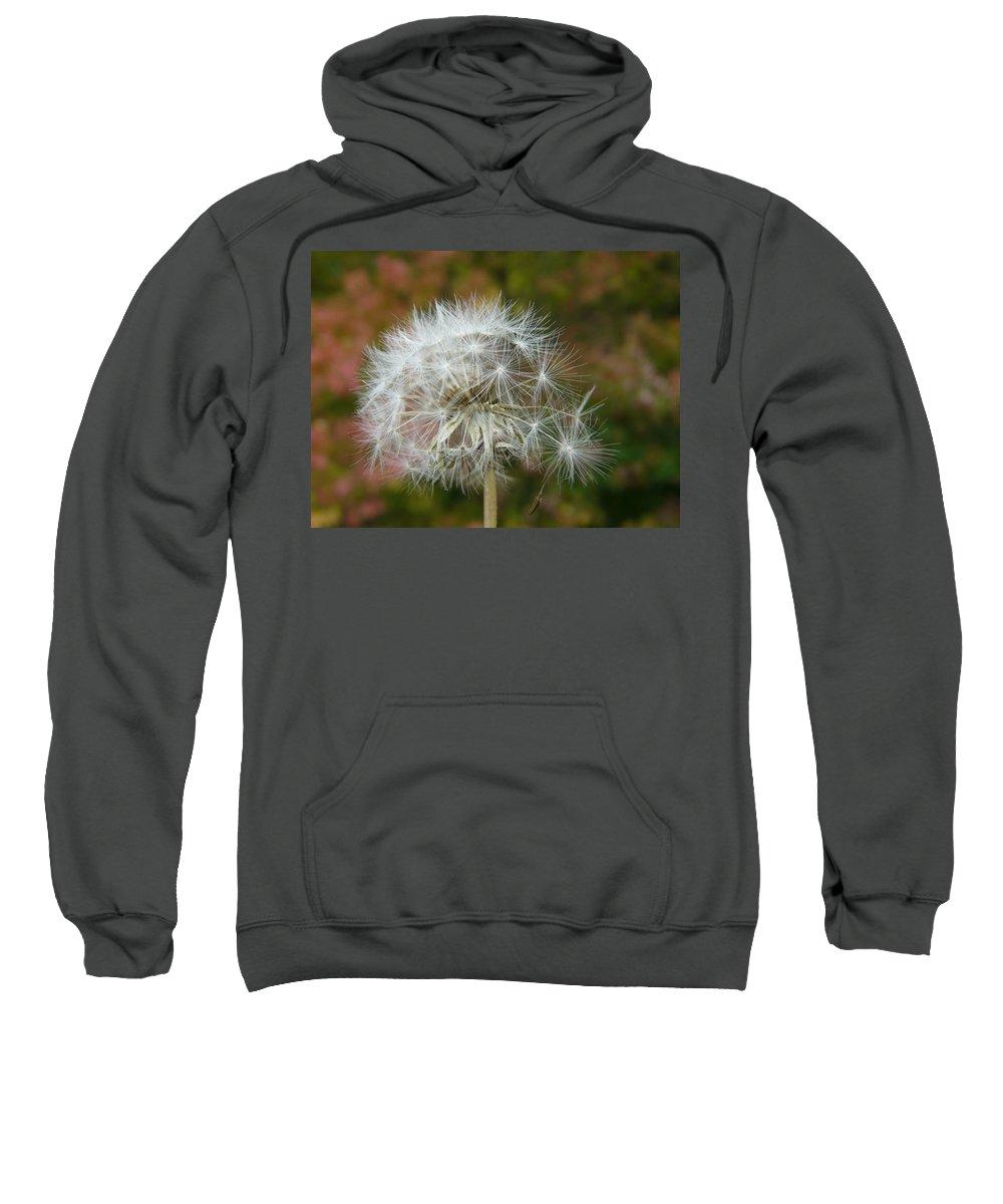 Blowball Sweatshirt featuring the photograph Blowball 3 by Valerie Ornstein