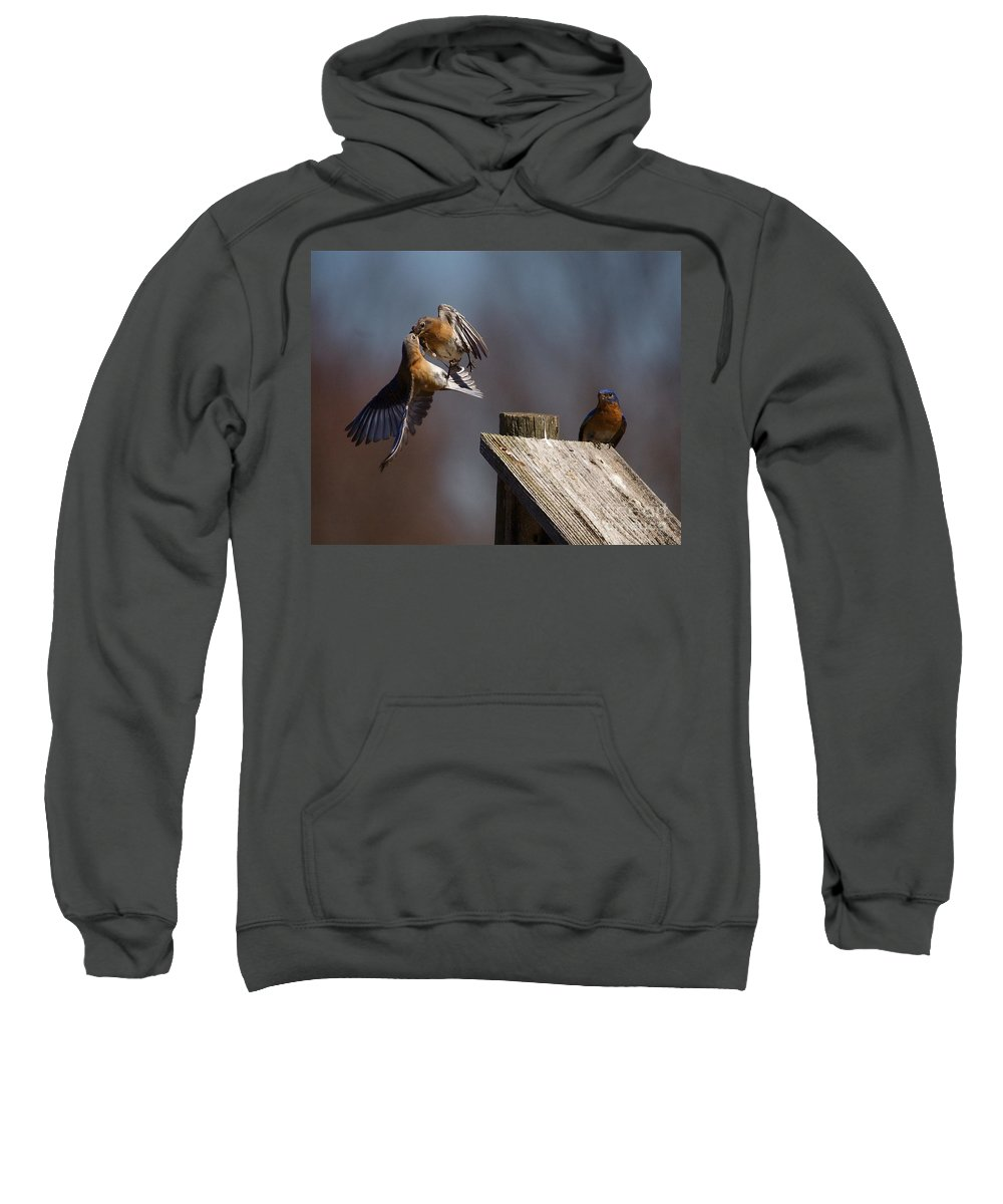 Blue Bird Sweatshirt featuring the photograph Blue Bird Mayhem by Robert Pearson