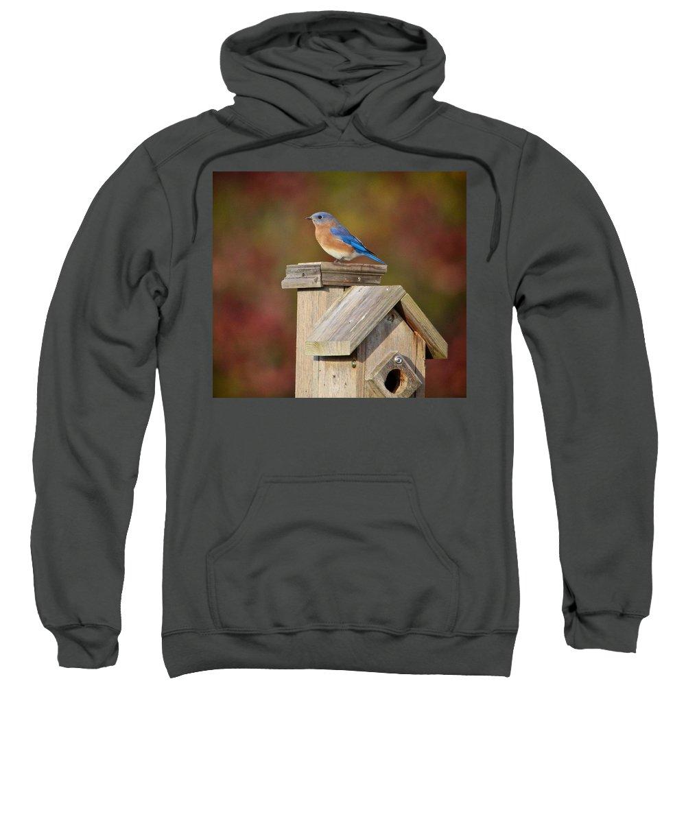 Bird Sweatshirt featuring the photograph Blue Bird by Robert Pearson