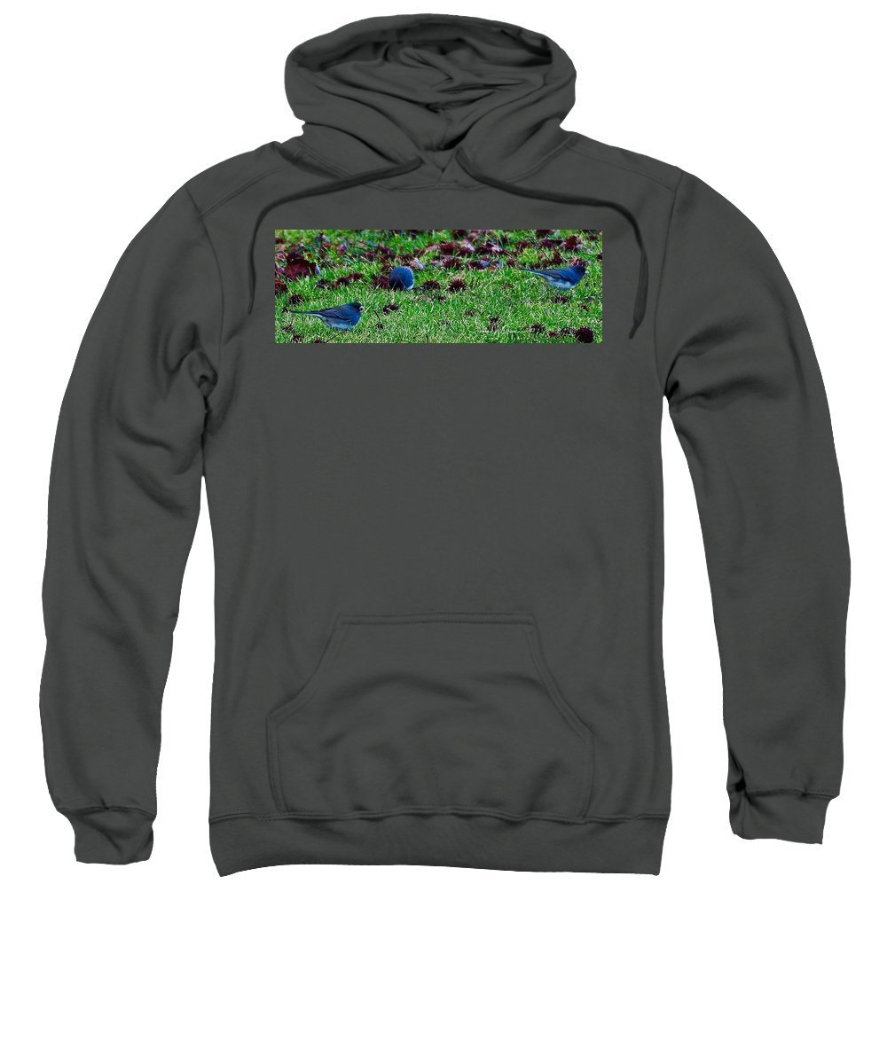Bird Sweatshirt featuring the photograph Blue Birds In Winter by Shawn M Greener
